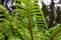 Sunlit Bright Green Forest Fern Fronds Art
