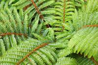 Ferns Fronds Leaves Art Prints Forest Fern