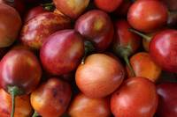 Tree Tomatoes at the Market