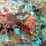 """scorpion fish eye"" by bronco"