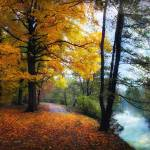 """""""Autumn River View"""" by JessicaJenney"""