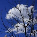 """Winter Tree Branches Blue Sky art White Clouds"" by BasleeTroutman"
