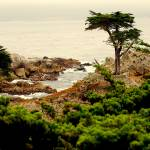"""Carmel Lone Cypress Tree"" by cornpics"