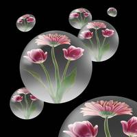 Flower Bubble Orbs