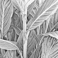 Striped Canna Leaves With Stalk