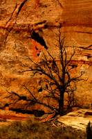 Red Rock Dead Tree