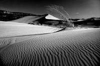 Coral Pink Sand Dunes in Black and White
