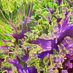 """Ornamental Kale"" by joeyartist"