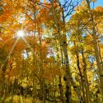"""Autumn aspens sunburst"" by lizmix"