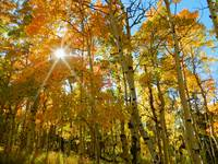 Autumn aspens sunburst