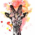 """Smiling Giraffe Animal Portrait"" by idillard"