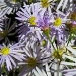 """""""Flower Garden"""" by vpicks"""