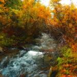 """fall creek oil painting"" by lizmix"