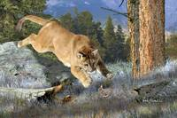 Wildlife Art - Cougar