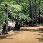 """Black Cypress Creek"" by bettynorthcutt"
