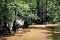 Black Cypress Creek