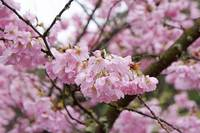 Blossoms Pink Art prints Pink Tree Flowering Sprin