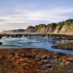 """Mendocino Tide Pool"" by Bracco"