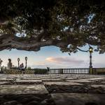 """Ficus Magnonioide In The Alameda De Apodaca Cadiz"" by Avanzini"