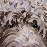 labradoodle brown Art Prints & Posters by David Rogers