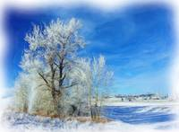 Frosted Trees 01