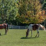 """""""Horses in the Meadow"""" by EvesNature"""