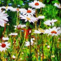 A Dream of Daisies