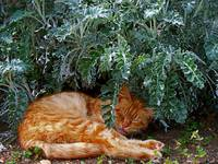 Cat Dreaming in  a Garden