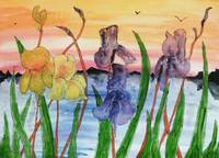 Irises by the lake