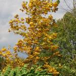 """IMG_7831 Autumn Wind"" by outdoorsintheeast"