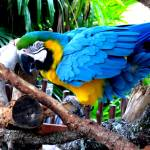 """Parrot"" by SanaKiy"
