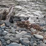"""""""Stream Flowing Beside Rocks"""" by outdoorsintheeast"""