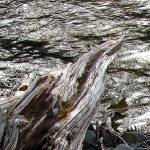 """Stream Flowing by Rocks Detail"" by outdoorsintheeast"