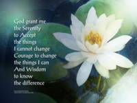 Serenity Prayer Lotus One
