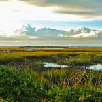 """Autumn Marsh - Sullivans Island"" by WrightFineArt"