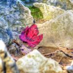 """Red Leaf"" by gnossisart"