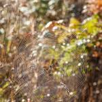 """Autumn Spiders web"" by maxblack"