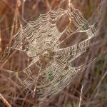 """Broken Web-Autumn"" by maxblack"