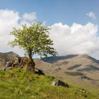 Lonely Tree-Glenshiel-Scottish Highlands. Art Prints & Posters by David Johnson