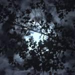 """Night Sky"" by artographic66"