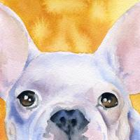 french bulldog white Art Prints & Posters by David Rogers