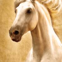 Magnificent Presence Horse Painting Art Prints & Posters by Zeana Romanovna
