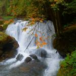 """Autumn Shine At Whatcom Falls"" by artsandi"