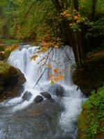 Autumn Shine At Whatcom Falls