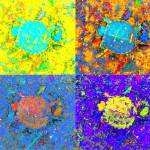 """A Sequence of Toddler Turtles"" by Saturato"