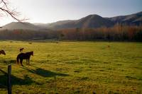 Morning in the Pasture
