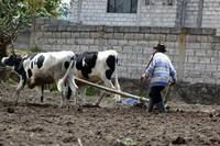 Farmer Plowing a Field