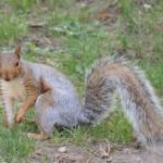 """Squirrel"" by vpicks"