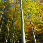 """Beskid trees"" by bogfl"