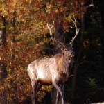 """""""elk"""" by erinlanzendorfer"""